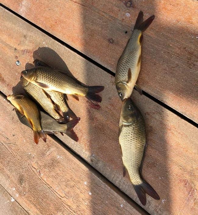 ماهیگیری در مزرعه